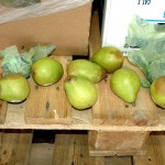 Grey mould rot of fresh Anjou pears